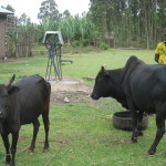 With more water , more cattle can drink